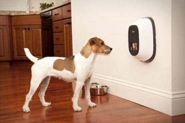 Best Pet Camera And Treat Dispenser