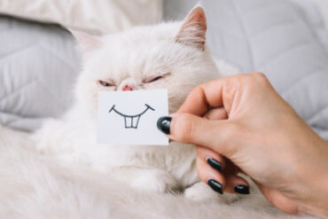 The 7 Best Cat Toothpastes (Review) in 2020