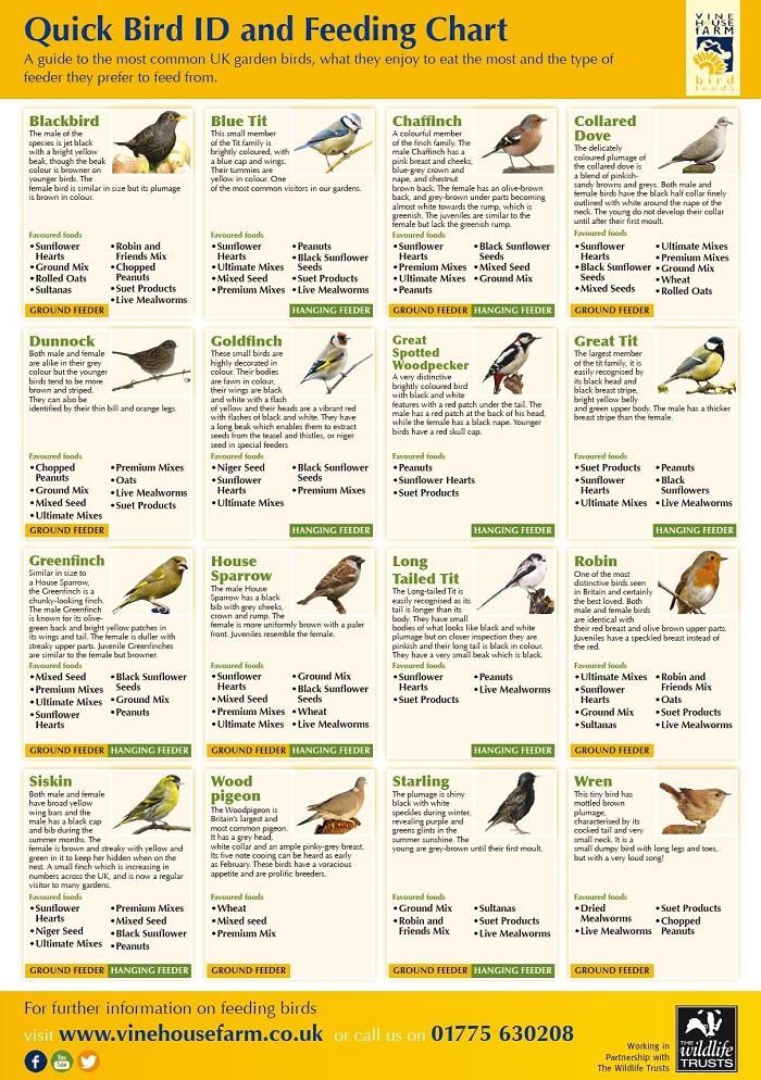 Bird ID Feeding Chart