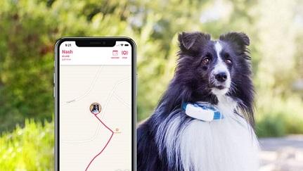 GPS pet tracker2