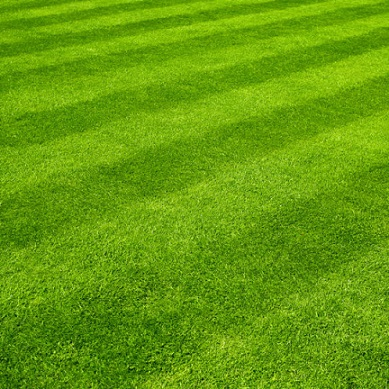 Mowing the lawn in the same pattern8