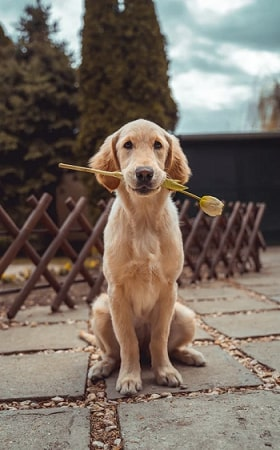 10 Tips on How to Take Puppy Photos using Pet Camera