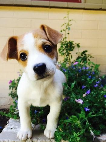 puppy tip2