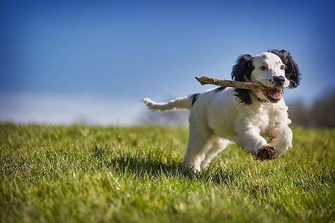 puppy tip3