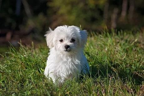 puppy tip5