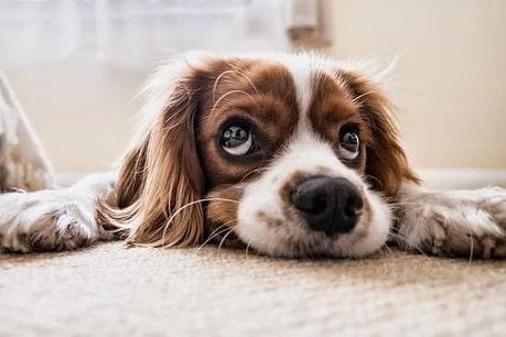 puppy tip6
